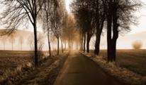 Weg, Nebel, Sepia, Natur