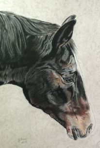 Portraitzeichnung, Tierportrait, Pferdeportrait, Zeichnung