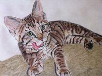 Portraitzeichnung, Pastellmalerei, Katzenzeichnung, Katzenportrait