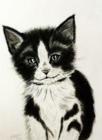 Tierportrait, Katze, Katzenportrait, Katzenzeichnung