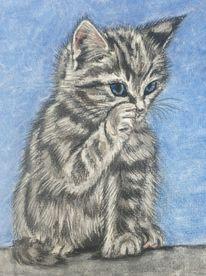 Tierzeichnung, Katze, Pastellmalerei, Zeichnungen