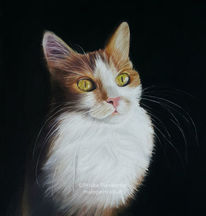 Tiere, Pastellmalerei, Katze, Katzenportrait