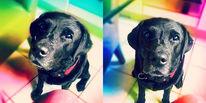 Hund, Regenbogenfarben, Beste freund, Laprador