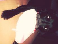 Hund, Fotografie
