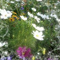 Blumen, Wiese, Gras, Blumenwiese