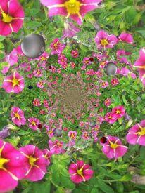 Blumen, Träme, Pink, Digitale kunst