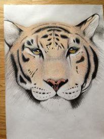 Buntstiftzeichnung, Tiger, Polychromos, Tiere