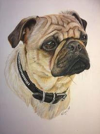 Pastellmalerei, Kegel, Tierportrait, Hund