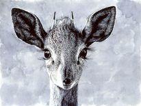 Antilope, Fell, Augen, Tiere
