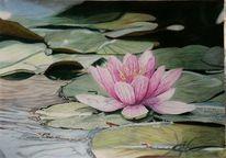 Seerosen, Blumen, Teich, Zeichnungen