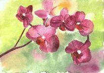 Orchidee, Blumen, Pflanzen, Blätter