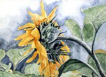 Stängel, Blumen, Blätter, Sonne