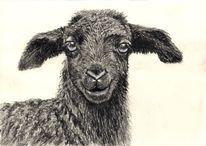 Schwarz weiß, Natur, Zeichnung, Tiere
