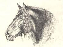 Tierportrait, Noriker, Bleistiftzeichnung, Tietporträt