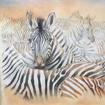 Tierportrait, Zebra, Afrika, Tieraquarell