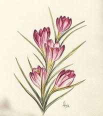 Blumen, Aquarellmalerei, Krokus, Frühling