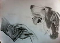 Kohlezeichnung, Zeichnung, Tiere, Hund