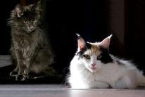 Katze, Fotografie