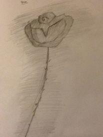 Rose, Zeichnungen, Pflanzen