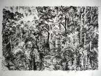 Zeichnungen, Regenwald