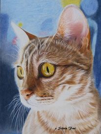 Bengalkatze, Katzenportrait, Katze, Buntstiftzeichnung