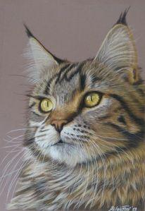 Katzenzeichnung, Pastell portrait, Maine coon, Zeichnungen