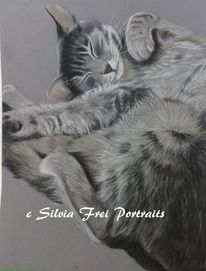 Zeichnung, Katzenportrait, Katze, Pastellmalerei