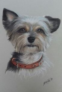 Tierportrait, Hund, Hundezeichnung, Künstlerfarbstifte