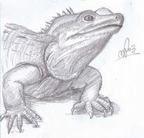 Leguan, Drache, Echse, Zeichnungen