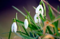 Pflanzen, Natur, Frühling, Fotografie