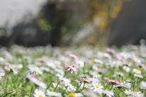 Frühling, Pflanzen, Nahaufnahme, Fotografie