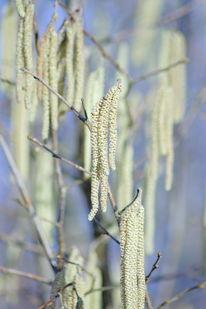 Landschaft, Natur, Baum, Fotografie