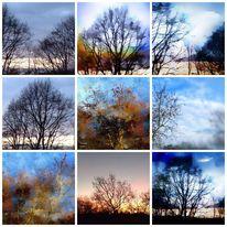 Baum, Natur, Wolken, Abbild