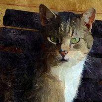 Realität, Katze, Tiere, Abbild