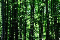 Wald, Matrix, Baum, Grün