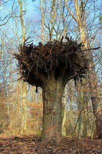 Upside down, Wald, Umkehren, Seitenverkehrt