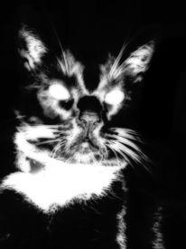 Dämon, Katze, Schwarz weiß, Fotografie