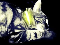 Reflektor, Angst, Katze, Halsband