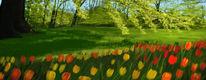 Bunt, Tulpen, Blumen, Wiese
