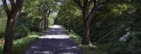 Waldweg, Frühling, Sonne, Allee