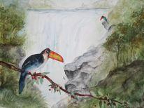 Tukan, Urwald, Vogel, Wasserfall