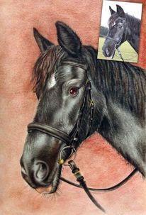 Technik, Pferd malen, Gemälde, Zeichnung