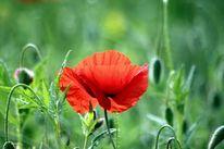 Ruhe, Blumen, Licht, Natur