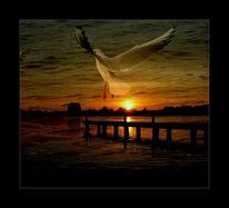 Möwe, Abend, Sonne, See