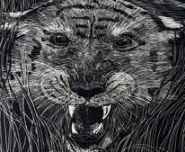 Tiger, Tigerkopf, Scratchboard, Wilde tiere
