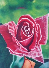 Malerei, Frost, Rose