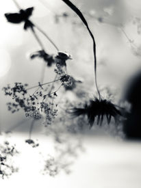 Blumen, Fotografie, Natur