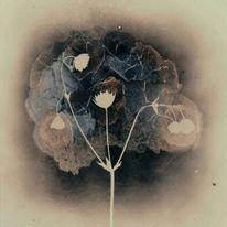 Blumen, Freunde, Surreal, Meer