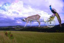 Wolken, Tiere, Fotografie, Digitale kunst