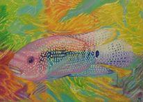 Wasser, Harmonie, Fisch, Licht